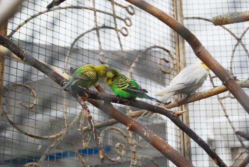 Домашние вольеры для птиц фото